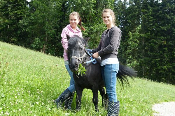 pony_streicheln